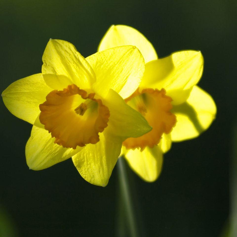 Frühling: Die Natur erwacht, doch der Mensch fühlt sich müde