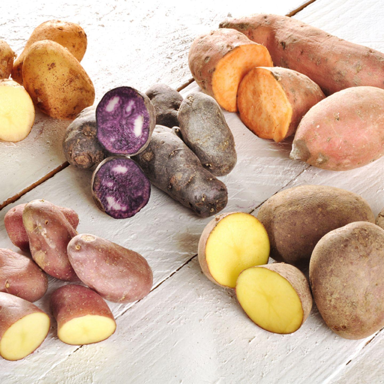 Kartoffel-Sorten auf einen Blick