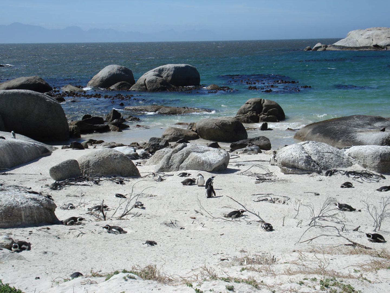 Pinguine am Kap