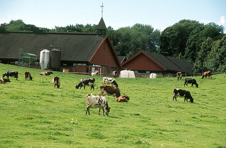 Königlicher Bauernhof