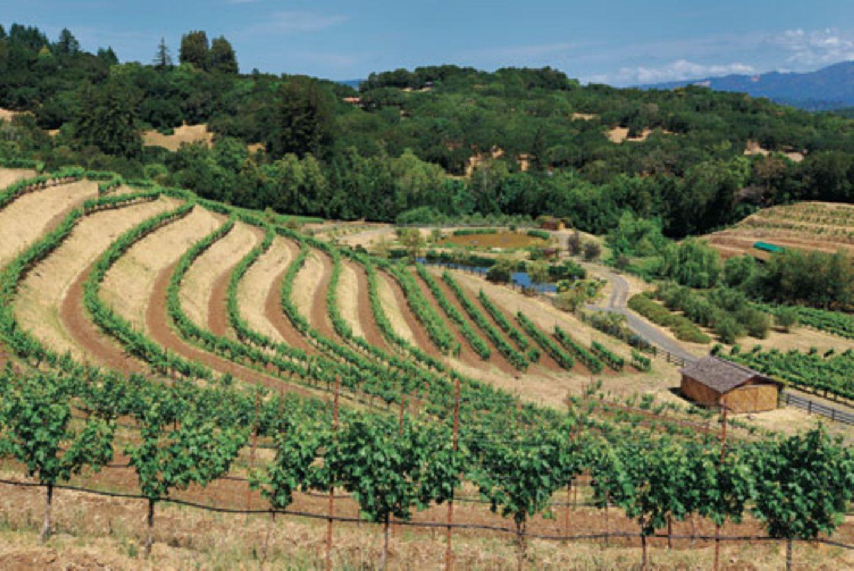 Wein aus Kalifornien