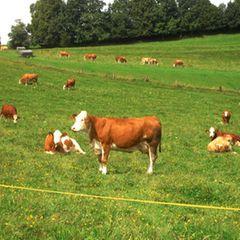 Gutes Futter für Allgäuer Kühe
