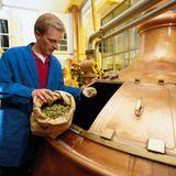 Hopfen in der Bierproduktion