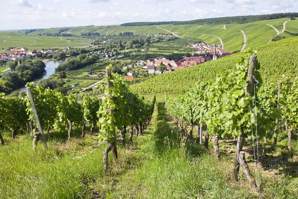 Fränkischer Rotwein-Wanderweg