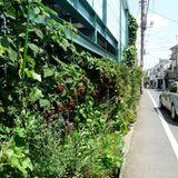 Japan: Tokyo DIY Gardening