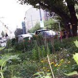Wien: Nachbarschaftsgarten Heigerlein
