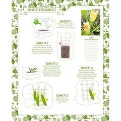 So geht's: Zucchini selber anbauen