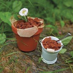 Rezept: Schokopudding-Pflanze