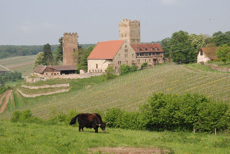 Württemberg: Naturerlebnispfad Neipperg
