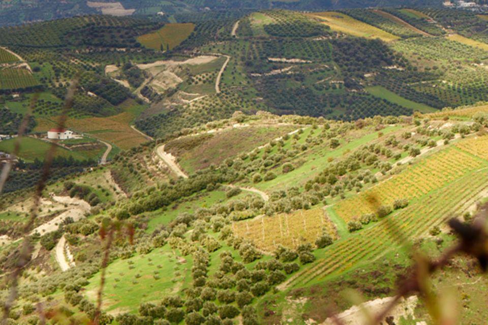 Wine&Nature