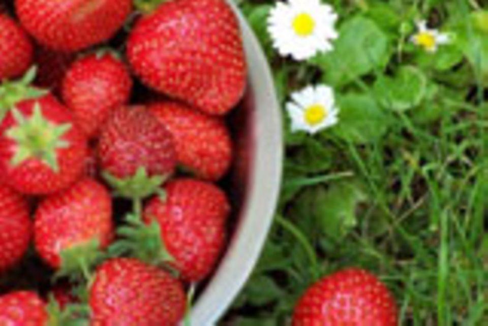 Frühlingsküche: Rezepte und Tipps