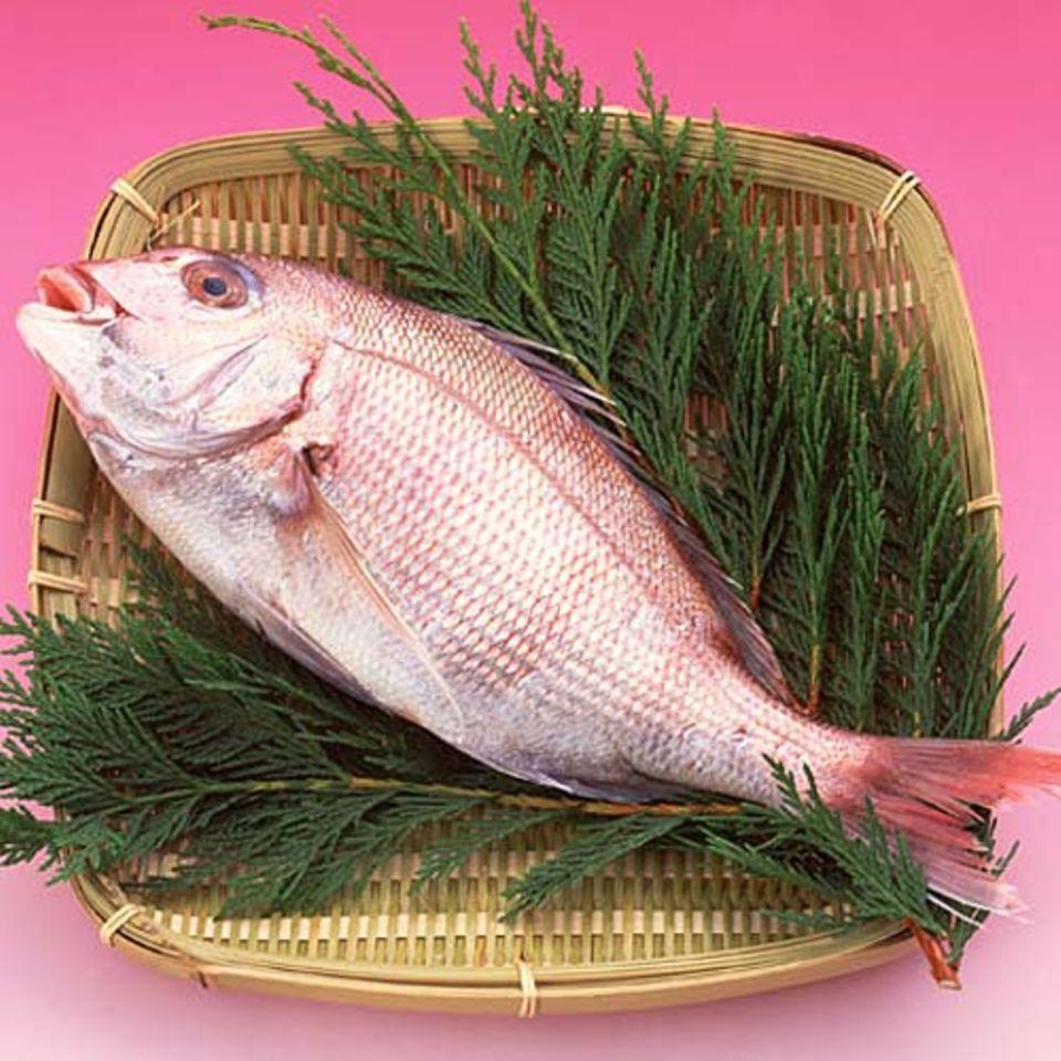 Followfisch: Mit dem Fisch auf Du und Du.