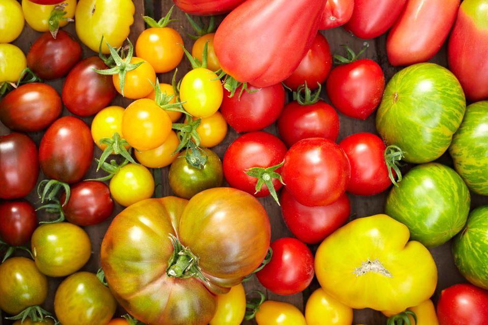 Tomaten sind rot? Heute reicht die Farbpalette von rot über orange bis hin zu grün und schwarz