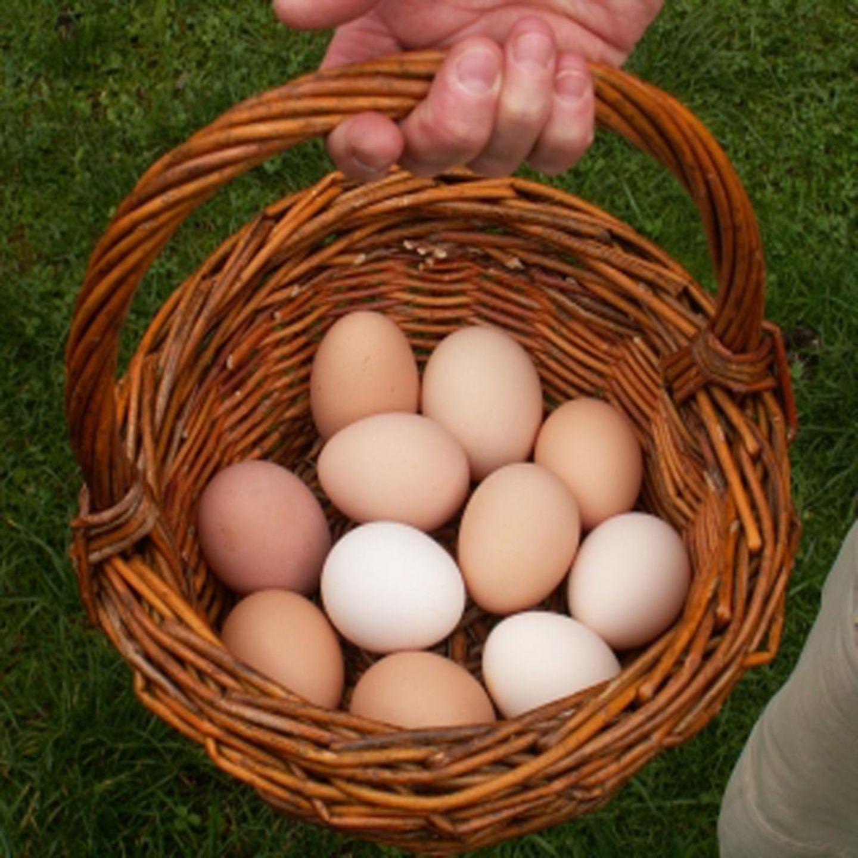 Eier Warenkunde