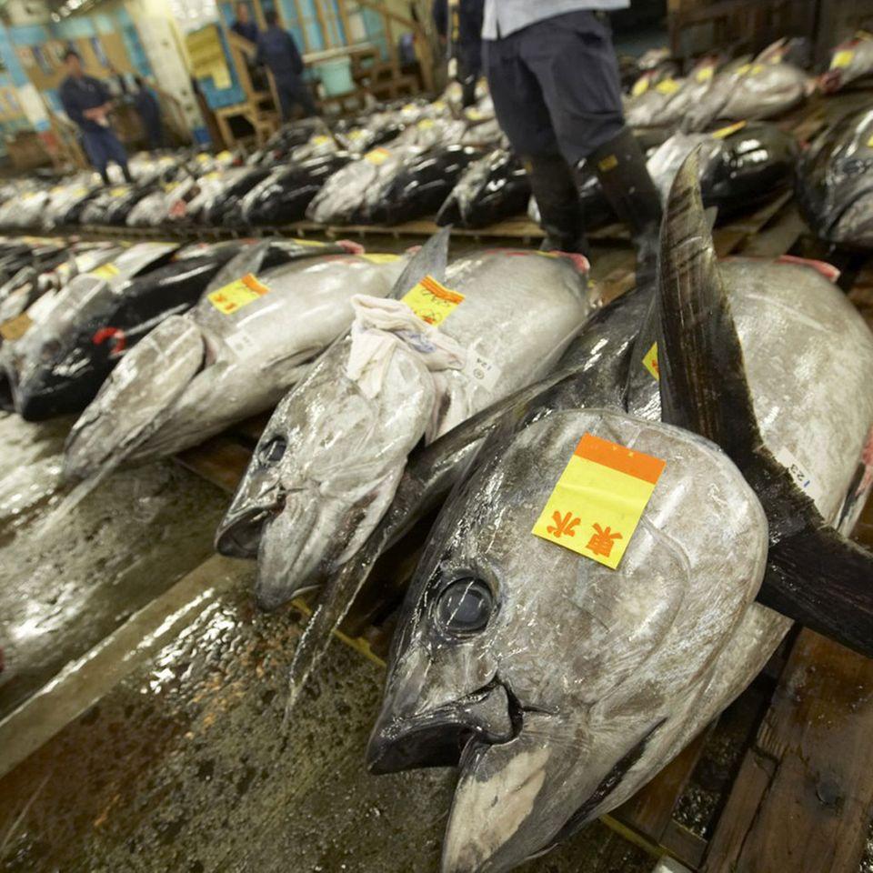 Die Tunfischakution ist ein Highlight auf dem Tsukiji-Fischmarkt
