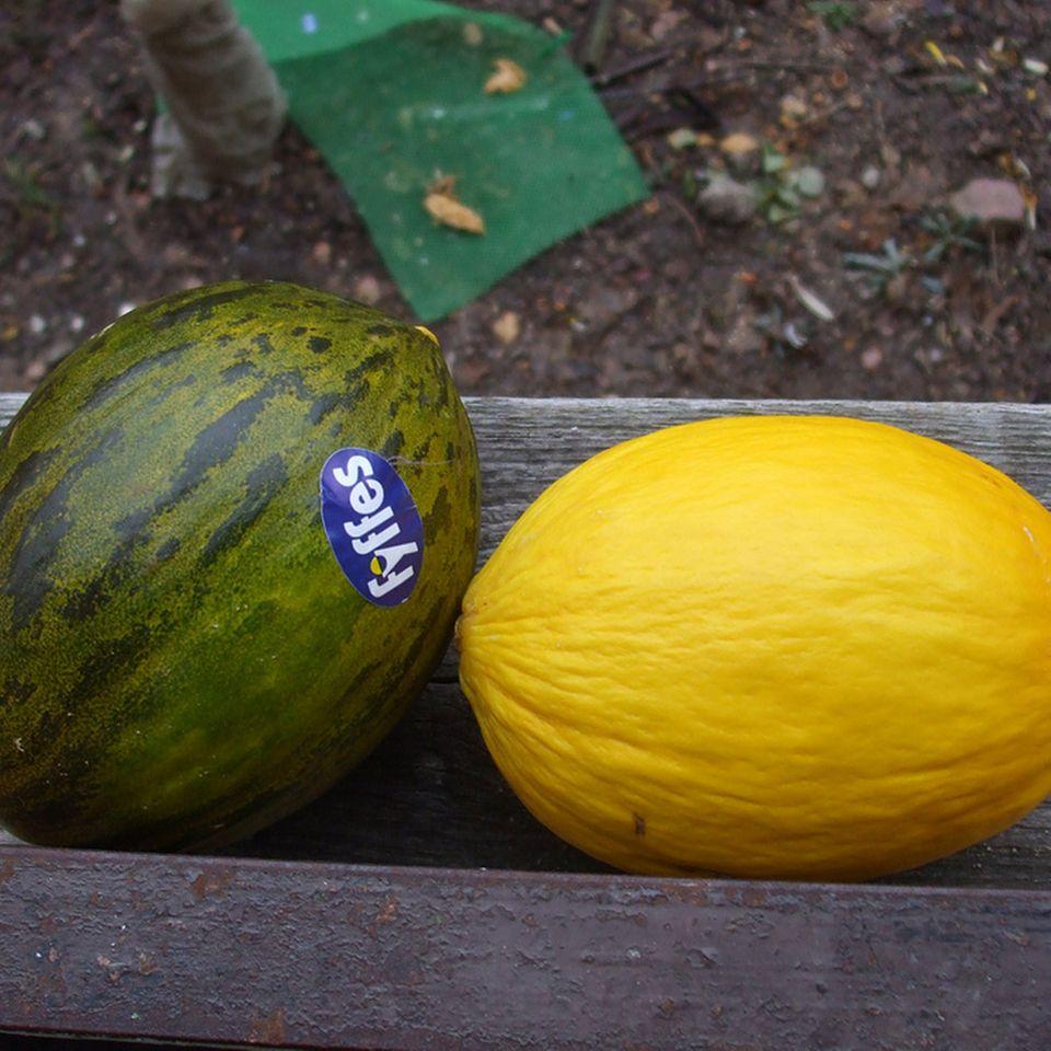 Sorten der Zuckermelone