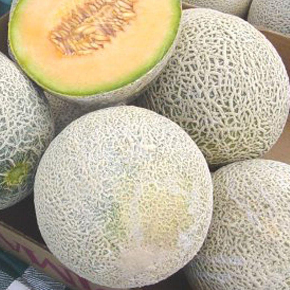 Frische Netzmelone