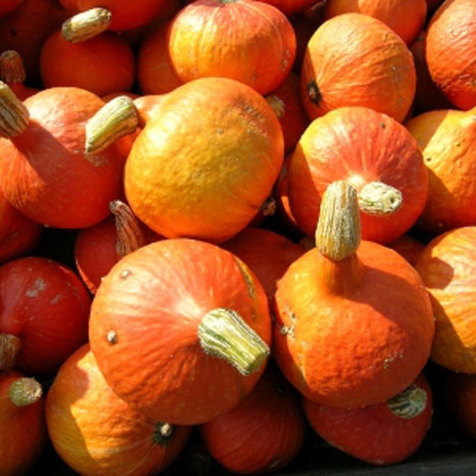 Der Hokkaido-Kürbis hat meist eine orangefarbene Schale