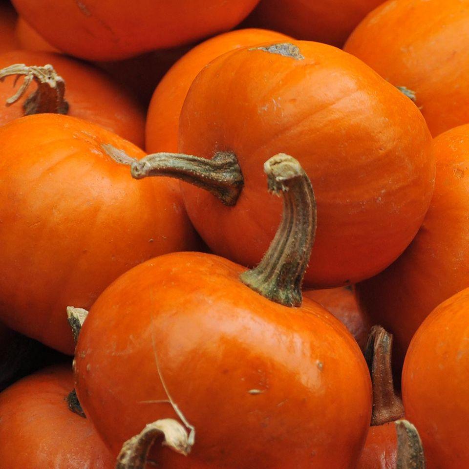 Beliebter Winterkürbis zu Halloween: Pumpkin