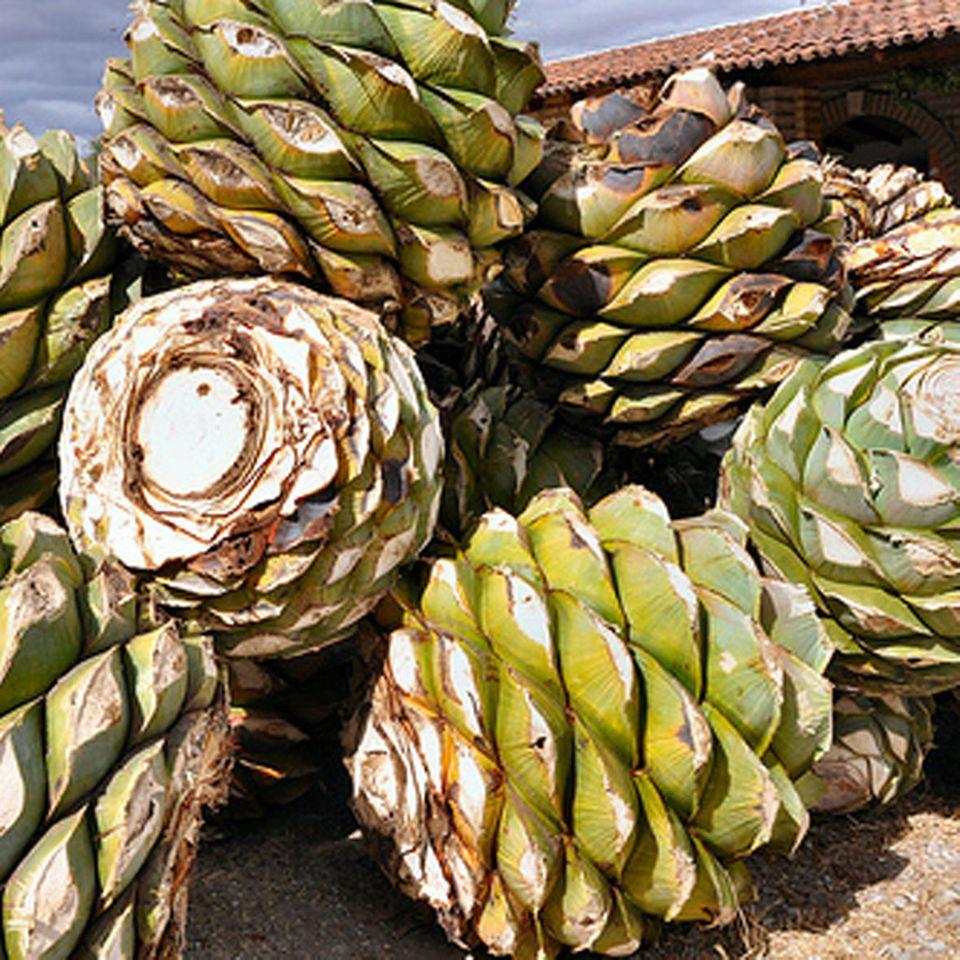 Die Agaven-Herzen werden geröstet, bevor Mezcal aus ihnen destilliert wird