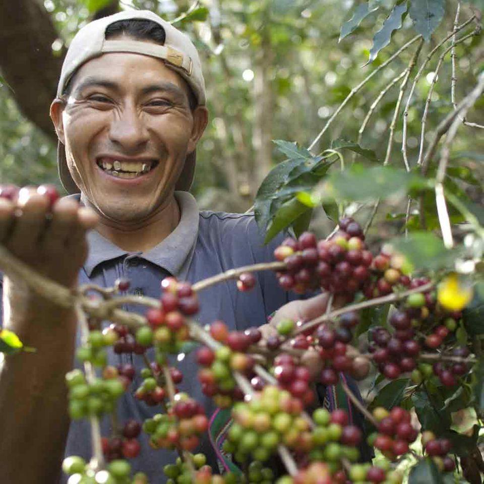 Fair Trade-Kaffeebauer aus Peru