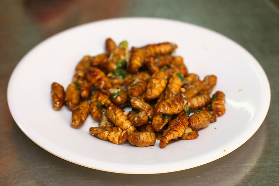 Frittierte Seidenraupen: ein Snack der Fujian Küche mit vielen Proteinen