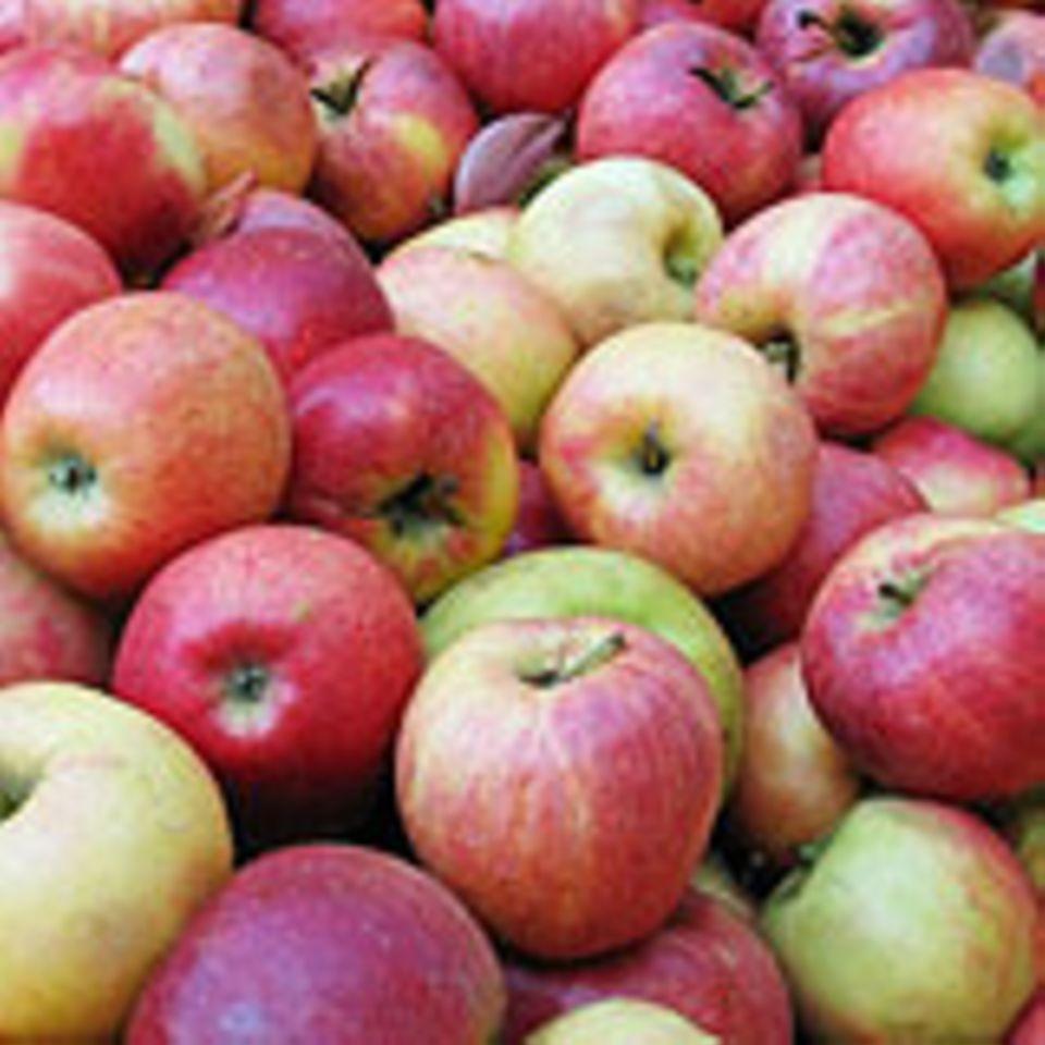 Äpfel sind eine Quelle für das Bindemittel Pektin