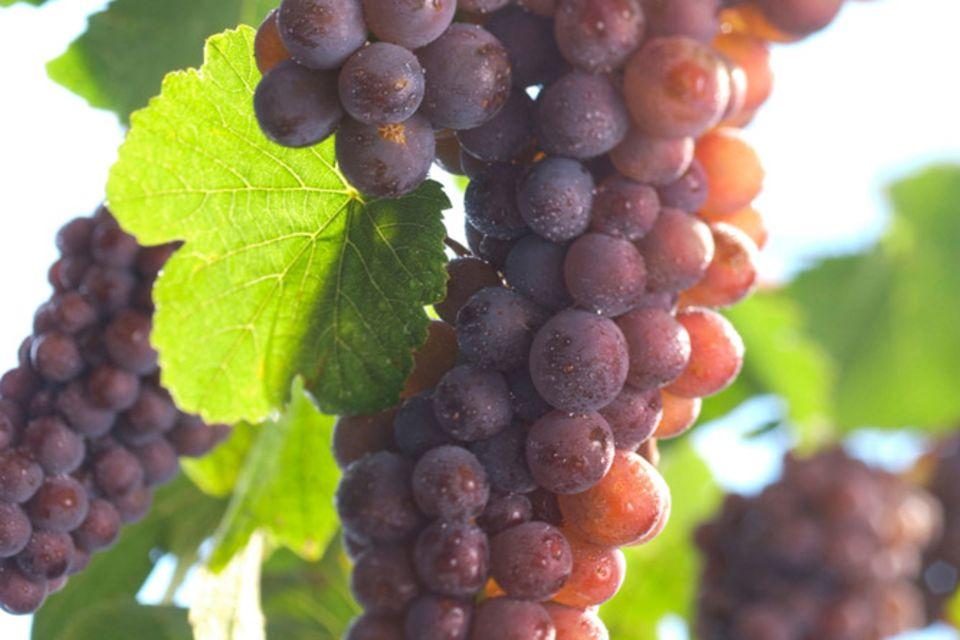 Geschmackvoll: das Weinland Frankreich