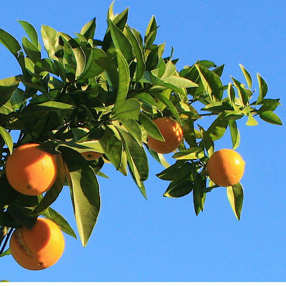 Sonnengereifte Früchte sind die Basis der Sonnenkost