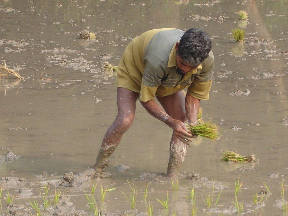 """Dank eines Reis-Projekts von """"Brot für die Welt"""" muss die Familie dieses Tagelöhners in Bangladesch nicht mehr hungern"""
