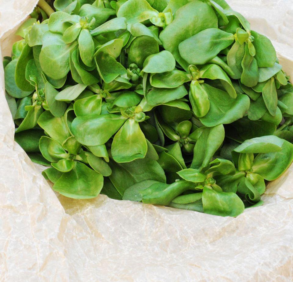 Portulak kann in der Küche als Gemüse oder Gewürz genutzt werden