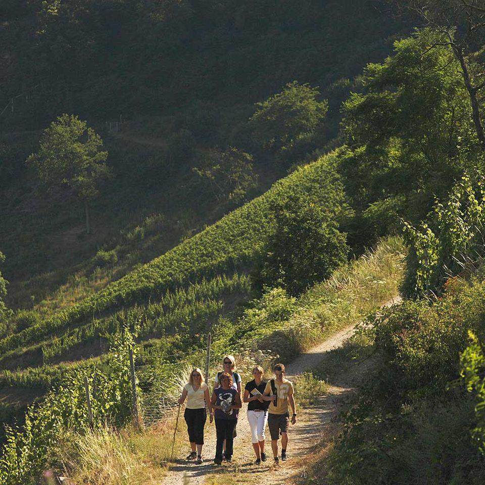 Wandern, wo der Wein wächst: Am Mittelrhein
