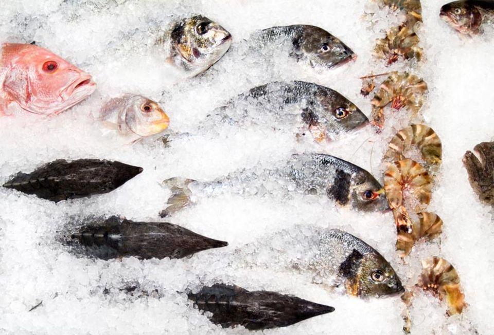 Frische Fische werden auf Eis gelagert