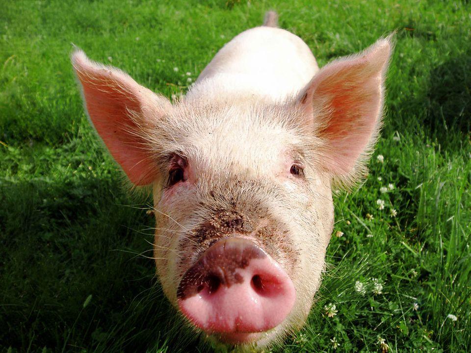 Für besseren Tierschutz: Das Tierwohl-Label