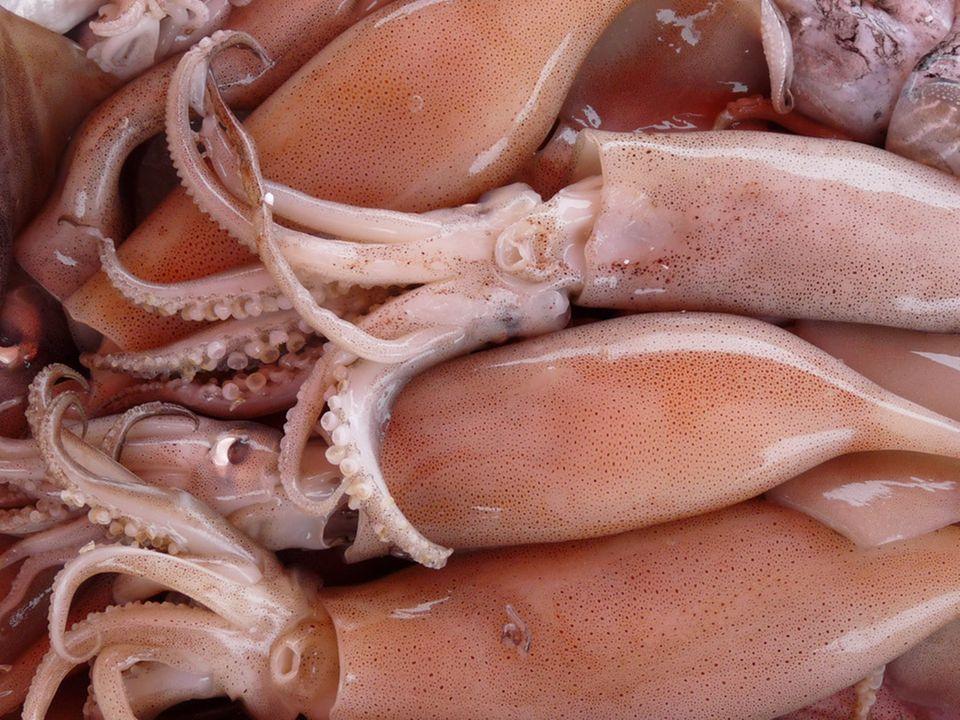 Frische Tintenfische