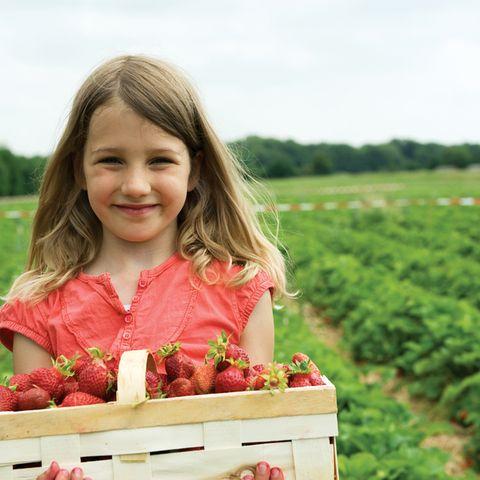 Bio erleben: zum Beispiel Erdbeeren im Sommer selber pflücken