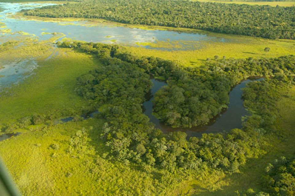 Auf Inseln im bolivianischen Amazonas wächst wilder Edelkakao