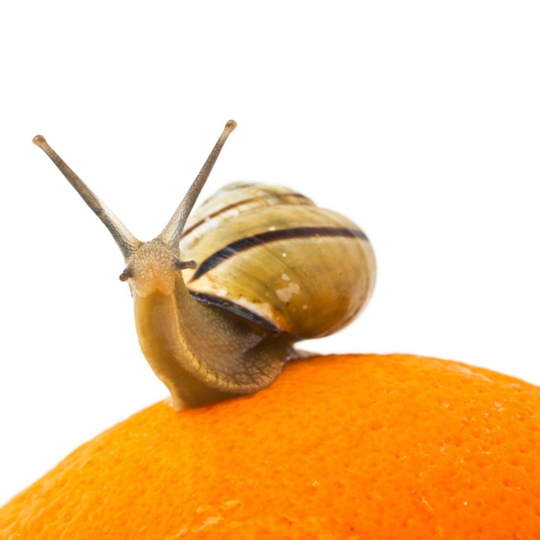 Slow Food: Infos und Rezepte