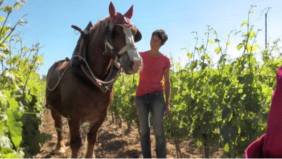 Biologisch-dynamischer Weinbau in St. Marcel d'Ardèche