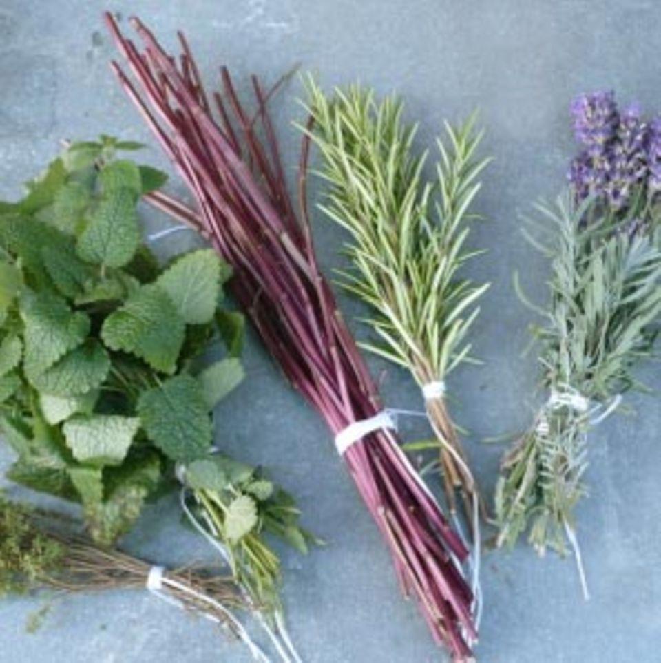 Die ätherischen Öle von Kräutern verleihen Gerichten Aroma und Richtung.