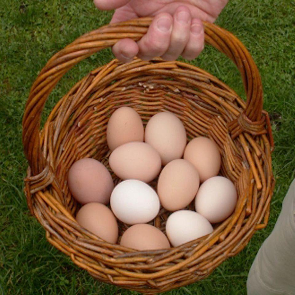 Eier im Korb - noch sind sie ganz!