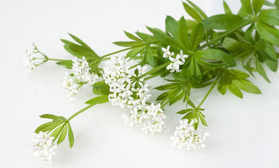 Kleiner Waldmeisterstrauß mit weißen Blüten