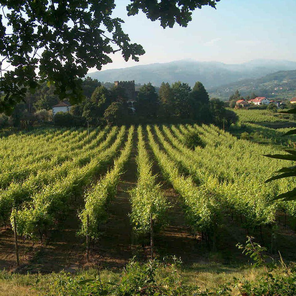 """Seinen Namen """"grüner Wein"""" verdankt der Vinho Verde der immergrünen Landschaft Nordportugals"""