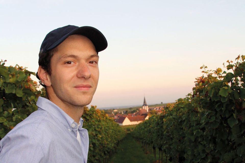 Ein Jahr auf dem Weingut: Herbst