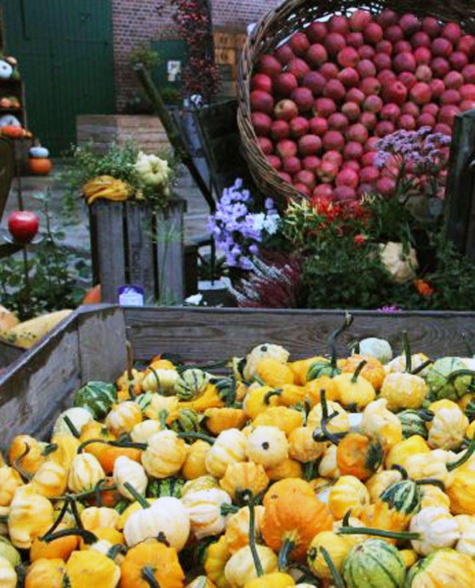 Bunte Kürbis- und Apfelvielfalt auf dem Obstparadies Schuback