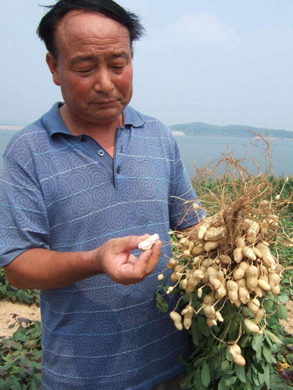 Fairer Erdnussanbau in der chinesischen Region Shandong