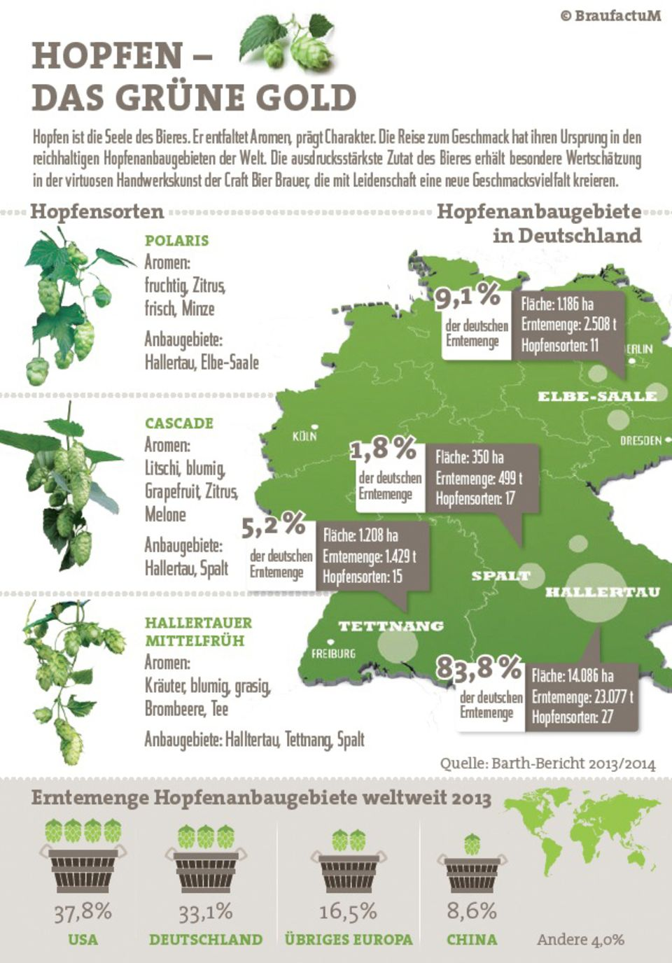 Infografik: Hopfenanbau in Deutschland