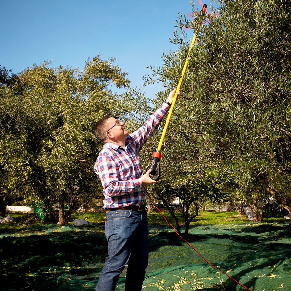 Kay-Henner Menge bei der Olivenernte in Kreta
