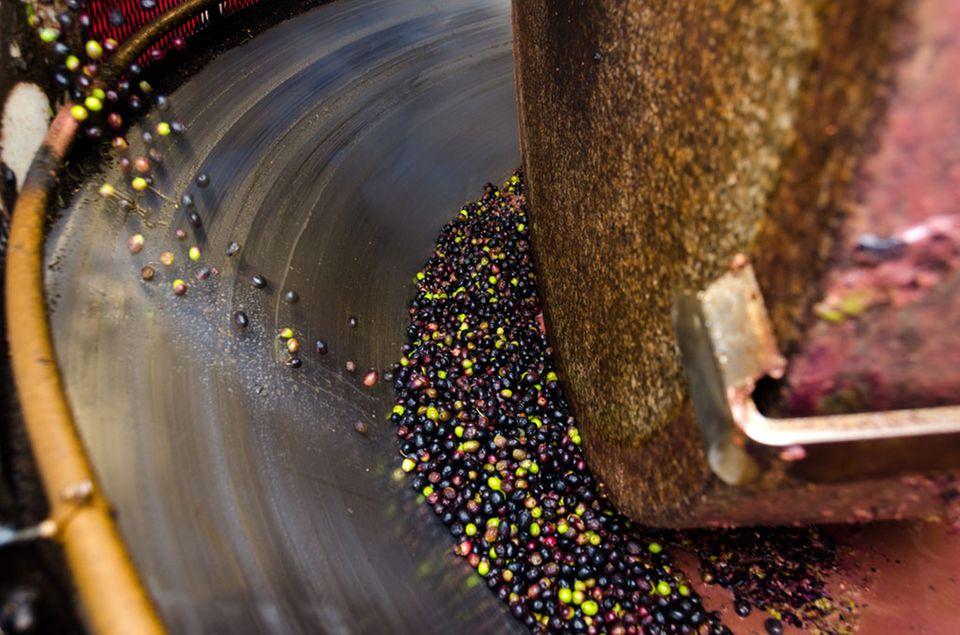 Oliven können mechanisch mithilfe eines Granitsteins gepresst werden