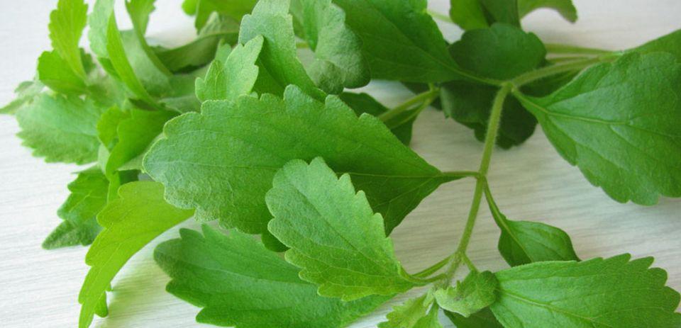Der Süßstoff wird aus der Stevia Pflanze gewonnen